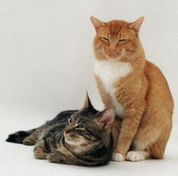 Age Cats Are Sexually Mature
